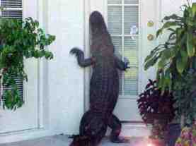 alligator at door