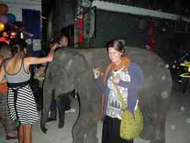 elephant at bar