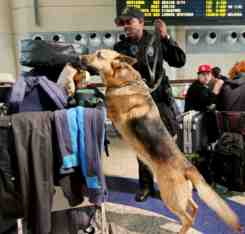 airport security sniffer